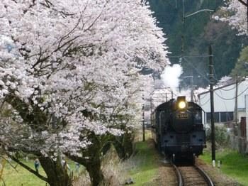 家山手前 桜.JPG